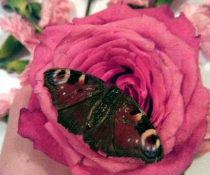 butterfly, flower, and pink image