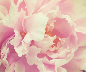 floral, flowers, and peonies image