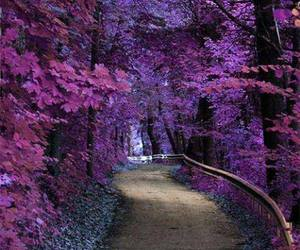 purple, nature, and tree image