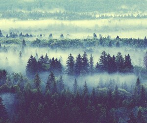 foggy, forest, and view image