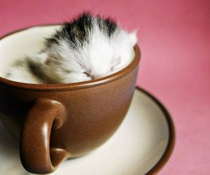 cat, cute, and cup image