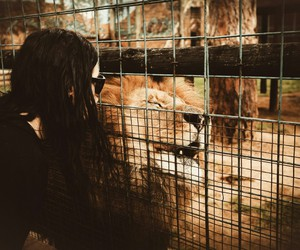zoo and skrillex image