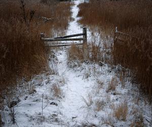 boho, nature, and pale image