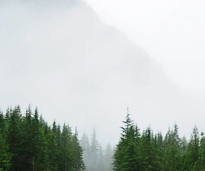 forest, mist, and nature image