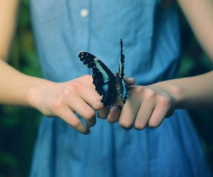 butterfly and Dream image
