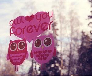 owl, love, and pink image
