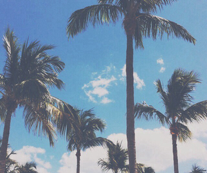 alternative, cool, and palm trees image