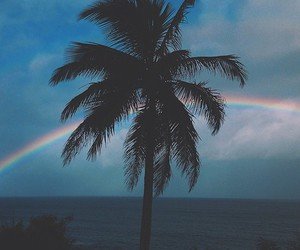 palm tree, rainbow, and surf image