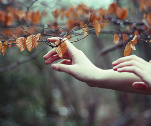 autumn, hands, and leaves image