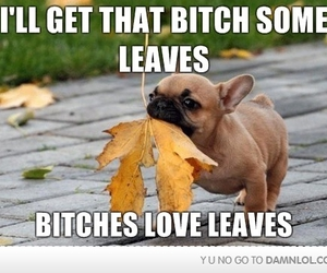 dog, leaves, and bitch image
