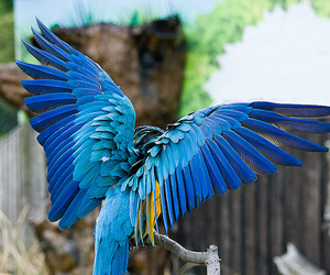 animal, blue, and wings image
