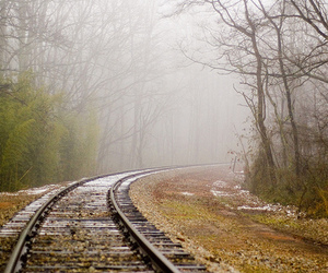 photography, train, and trees image