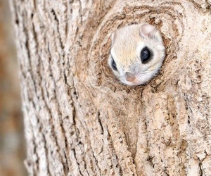 animal, cute, and siberian squirrel image