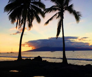 ocean, palm trees, and sky image