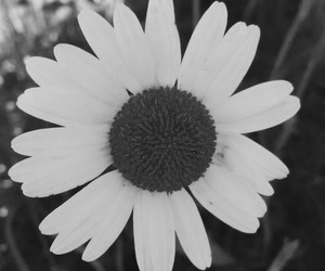 and, flower, and black image