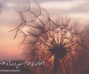 حب, عرب, and عشق image