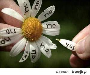 flowers, yes, and no image