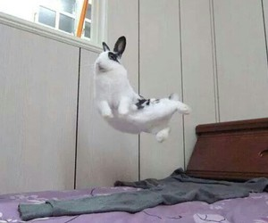 bunny, funny, and sweet image