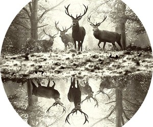animal and deer image