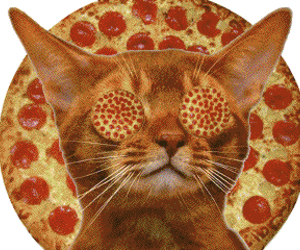 cat, pizza, and food image
