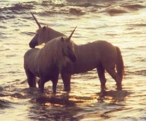 unicorn, sea, and water image