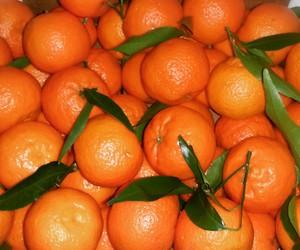 eat, good, and orange image