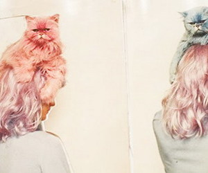 cat, hair, and pastel image