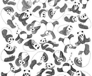panda, animal, and black image