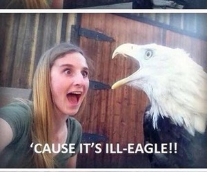 funny, eagle, and bird image