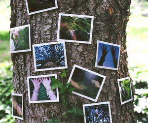 tree, photography, and photo image