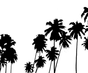 tumblr and palm trees image