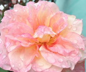 delicado, flor, and flower image