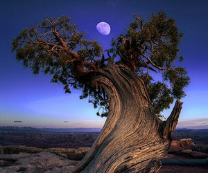 tree, nature, and moon image