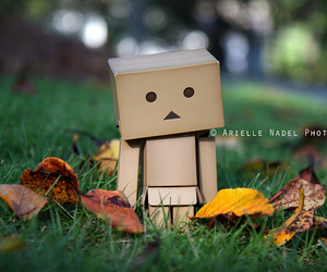 autumn, danboard, and green image