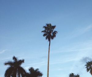 beach, trees, and blue image