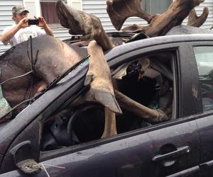 accident, car, and moose image