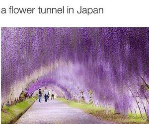 awesome, gorgeous, and japan image