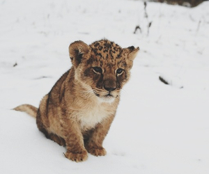 animal, cute, and snow image