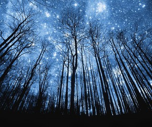 stars, forest, and blue image