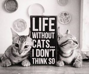 cat and life image