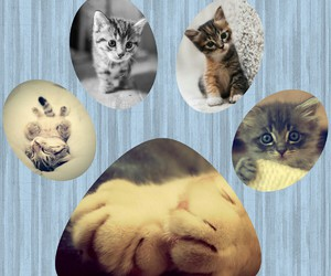 cats, tenderness, and inspiration image