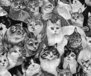 cats and luv image