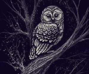 owl, animal, and night image