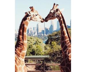 giraffe, cute, and love image