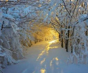 nature, snowy, and woods image