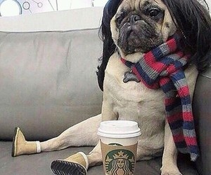 pug, puppy, and coffee image