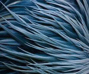 blue, dark, and feather image