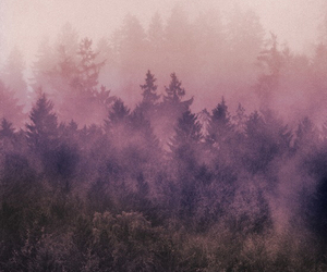 indie, forest, and colour image