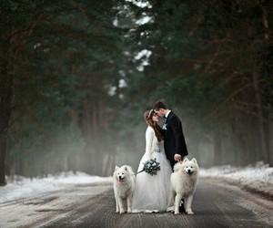 wedding, dog, and couple image