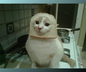 bread, cat, and funny image